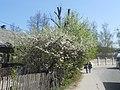 Nature in Smolensk - 18.jpg