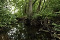 Nature reserve Niva Olšového potoka in summer 2014 (7).JPG