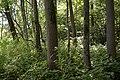 Naturschutzgebiet Haseder Busch - Im Haseder Busch (12).jpg
