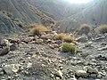 Navidhand new 330 - panoramio.jpg