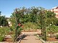 Norman, OK USA - University of Oklahoma - panoramio (8).jpg