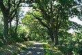 Northlew, lane from Hatherleigh - geograph.org.uk - 203077.jpg