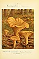 Nouvel atlas de poche des champignons comestibles et vénéneux (Pl. 23) (6459632855).jpg