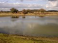 Ocknell Pond, New Forest - geograph.org.uk - 123661.jpg