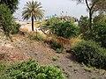 Ohalo Beach on Kinneret (Sea of Galilee) - panoramio.jpg