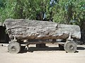 Old Felled Tree on Wooden Cart Echuca - panoramio.jpg