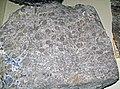 Oncolitic dolostone with galena (Bonneterre Dolomite, Upper Cambrian; St. Joseph's Lead Mine, Flat Rock, Missouri, USA) 2 (26547155937).jpg