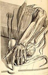 Ontleding des menschelyken lichaams.jpg