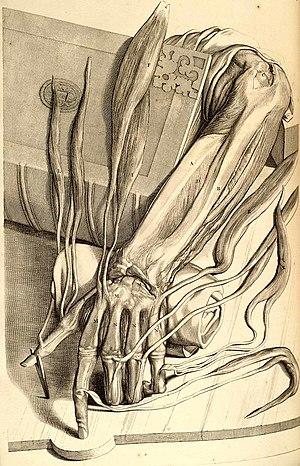 Govert Bidloo - Image: Ontleding des menschelyken lichaams
