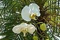 Orquidea005.JPG