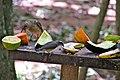 Os pássaros vão ao parque.JPG