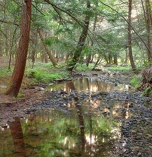 Oswayo Township, Potter County, Pennsylvania Township in Pennsylvania, United States