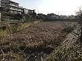 Ozakiike Pond near Kashii Technical High School.jpg