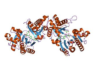 Glutamate formimidoyltransferase - the crystal structure of the formiminotransferase domain of formiminotransferase-cyclodeaminase.