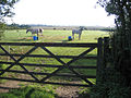 Paddock with horses, Whittlesford, Cambs - geograph.org.uk - 53042.jpg