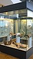 Paläontologisches-Zoologisches-Museum 5.JPG