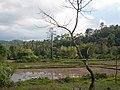 Palawan, Philippines, Wetlands.jpg