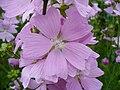 Paleflower3.jpg