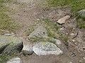 Papallona entre l'estany de Malniu i el Prat Fondal P1300491.jpg