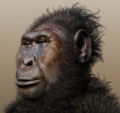Paranthropus boisei - forensic facial reconstruction.png