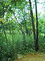 Parc-nature du Bois-de-l-ile-Bizard 08.jpg