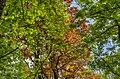 Parc Vouillants Erable Feuillages Pollock.jpg