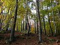 Parc naturel régional duLivradois-Forez.jpg
