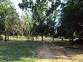 Parcodellatorricella2.jpg
