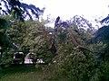 Park s fontánou pred ŽSR v PB, dnes už neexistujúci , nafotené po búrke , ktorá sa prehnala mestom 22.5.2009 (6 z 6) - panoramio.jpg