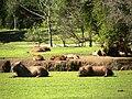 Parque Tingui em Curitiba.jpg
