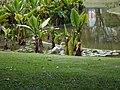 Parque del Este 2012 033.JPG