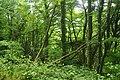 Passage Grove, Tidenham (9656).jpg