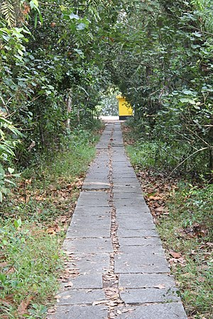 Pathiramanal - A walkway at Pathiramanal