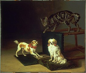 Cat Playing with Two Dogs