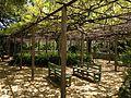 Pergola of wisteria floribunda in Miyajidake Shrine.JPG