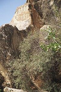 Petroglyphs in Gobustan 04.jpg