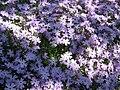 Phlox Emerald Cushion Blue02.jpg