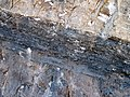 Phosphoria Formation (Permian; Astoria Hot Springs roadcut, Teton County, Wyoming, USA) 6 (49192389157).jpg
