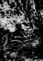 Photograph of Blue Heron in Swamp on Lake Mitchell - NARA - 2127857.tif