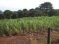 Pico do Itambé visto da rodovia para Altinópolis - panoramio.jpg