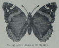 Picture Natural History - No 245 - Red Admiral Butterfly.png