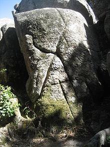 Nardodipace - Wikipedia