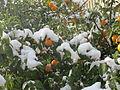 PikiWiki Israel 41378 Snow in Jerusalem.JPG