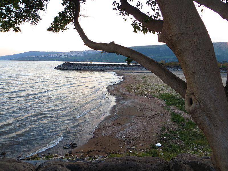 כנרת חוף גינוסר