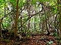 Pinckney Island National Wildlife Refuge (5957940175).jpg