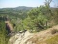 Pine on rock.jpg