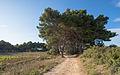 Pinet, Hérault 01.jpg