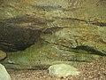 Piney Creek West Site.jpg