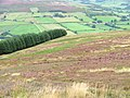 Plantation Corner from Barker's Ridge - geograph.org.uk - 54647.jpg