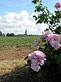 Plougasnou. Eglise. Roses.jpg